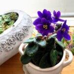 観葉植物の手入れと新しく迎えた花